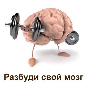 razbudi svoi mozg
